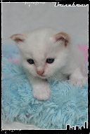 Les bébés de Foxy et Pepper Jack-3632176