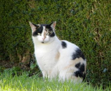 2 chats en danger - Les Essarts (85) Dscn3869-332e3a2