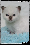 Les bébés de Foxy et Pepper Joe2-363211d